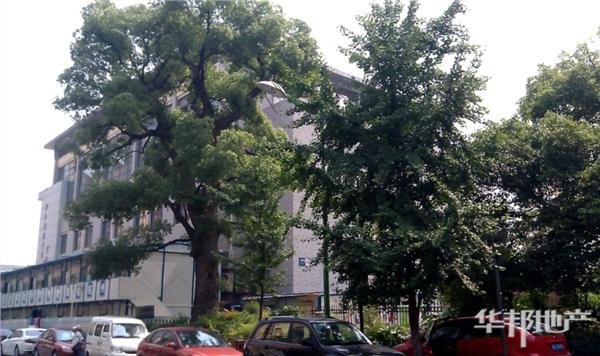 大樟树小区标志